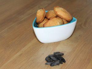 Madeleines à la fève de tonka